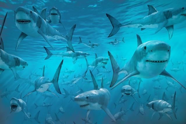 SHARK ENERGY PROTECTS SHARKS